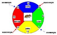 Действие радиации в зависимости от времени суток