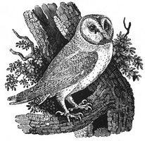 Ксилография Томаса Бьюика (1847 г.)